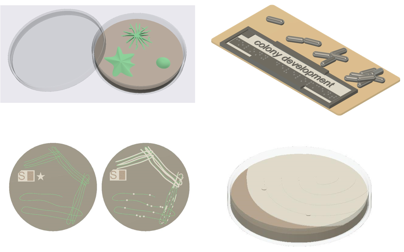 Four, 3D printable models illustrating different aspects of colony formation by bacteria